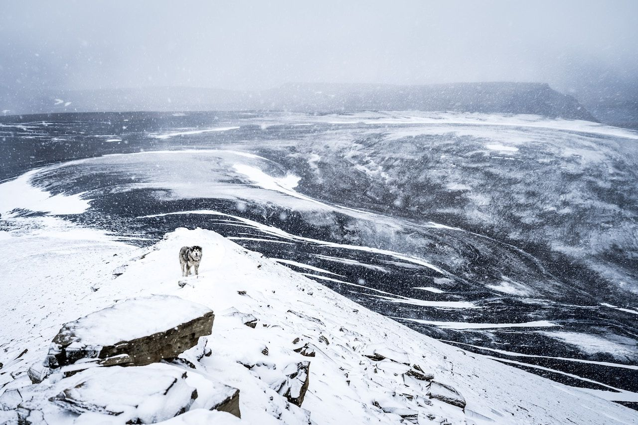 Move to Svalbard
