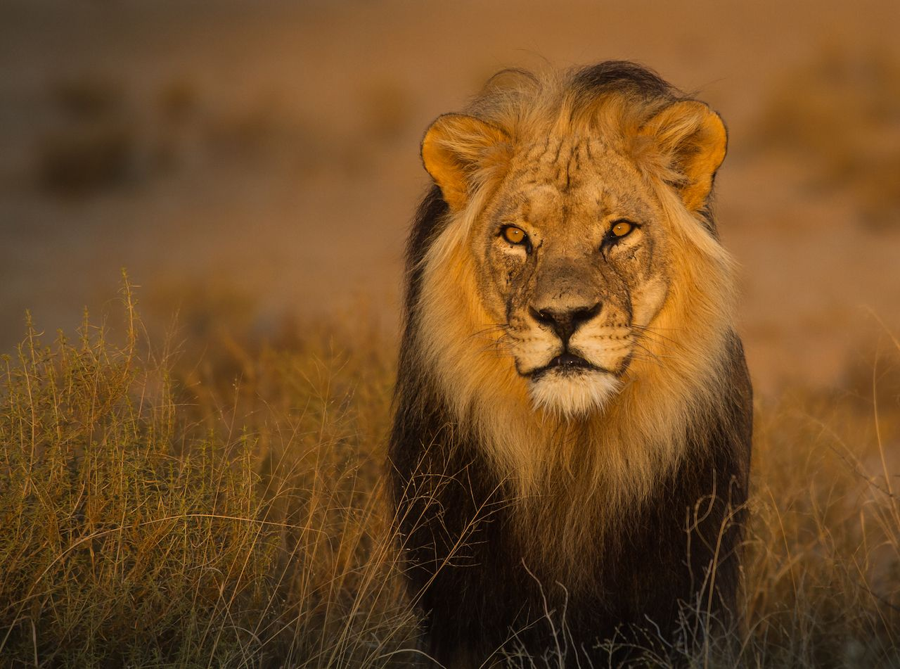 be88a9ef6f46a The world's 7 big cats and where to see them in the wild