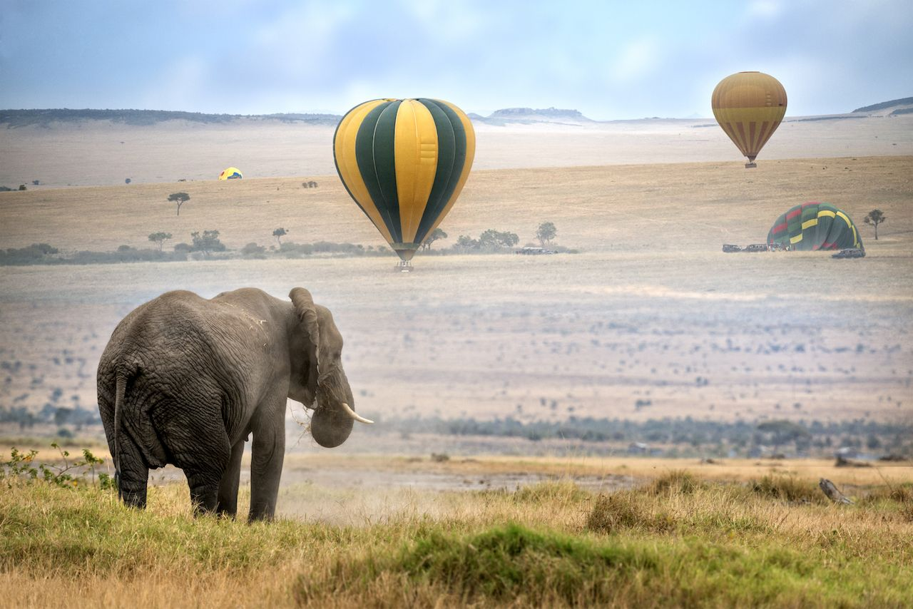 Hot air balloon and elephant