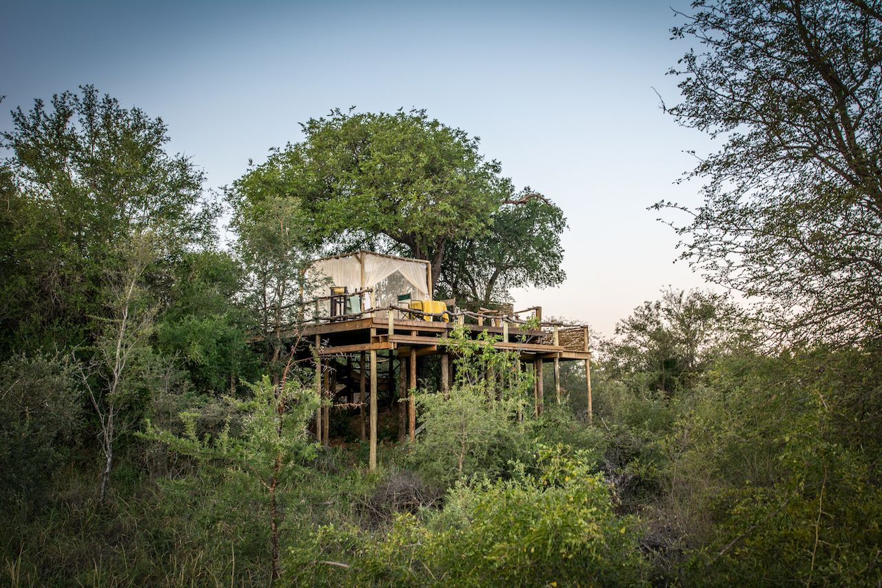 Glamping in a tree house Africa