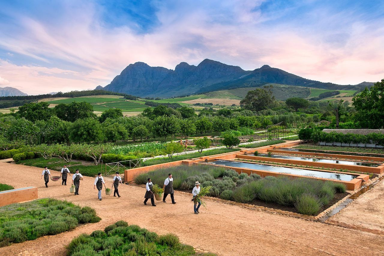 South Africa's wine country