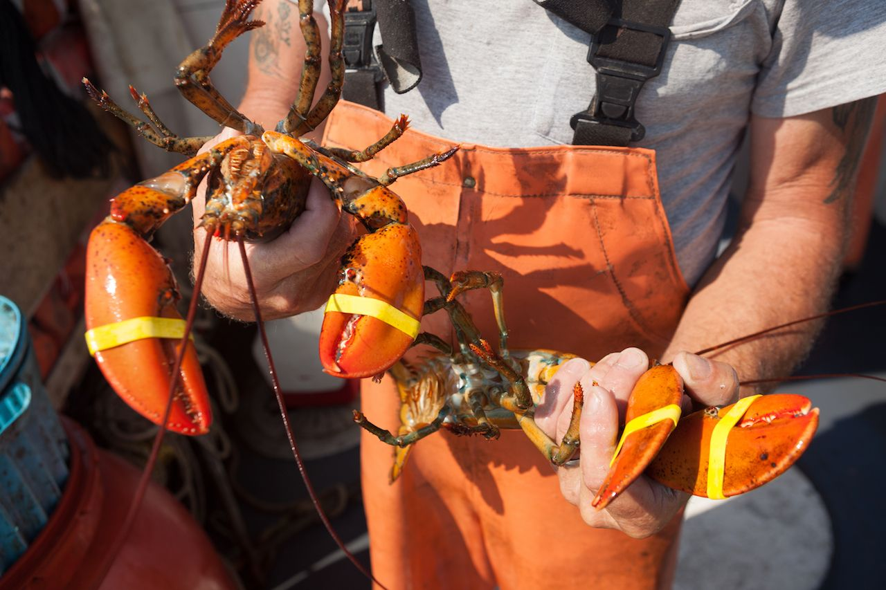 man holding lobster