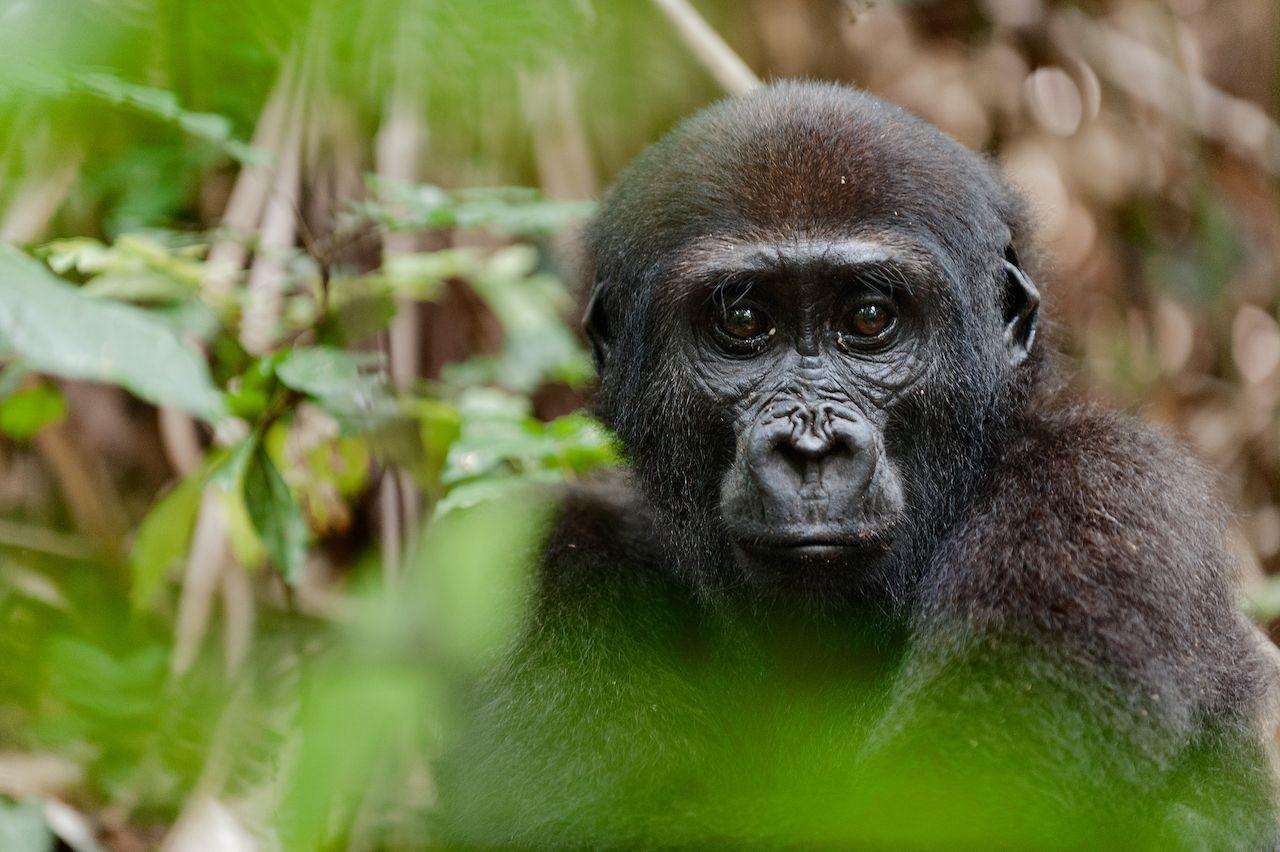 Congo, Africa