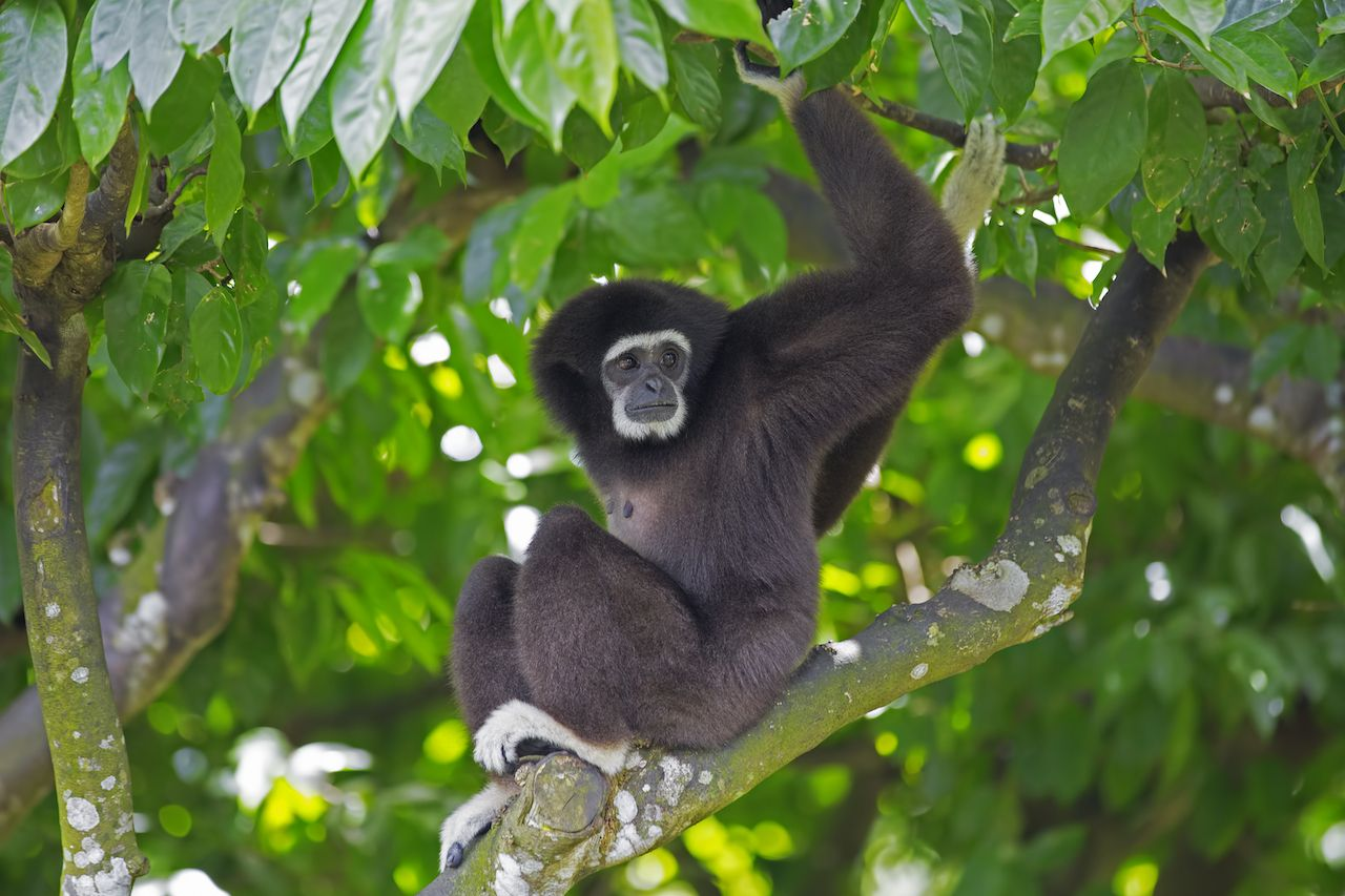 Borneo, Malaysia monkey