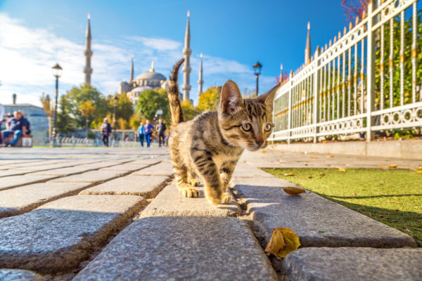 Best places in the world for cats