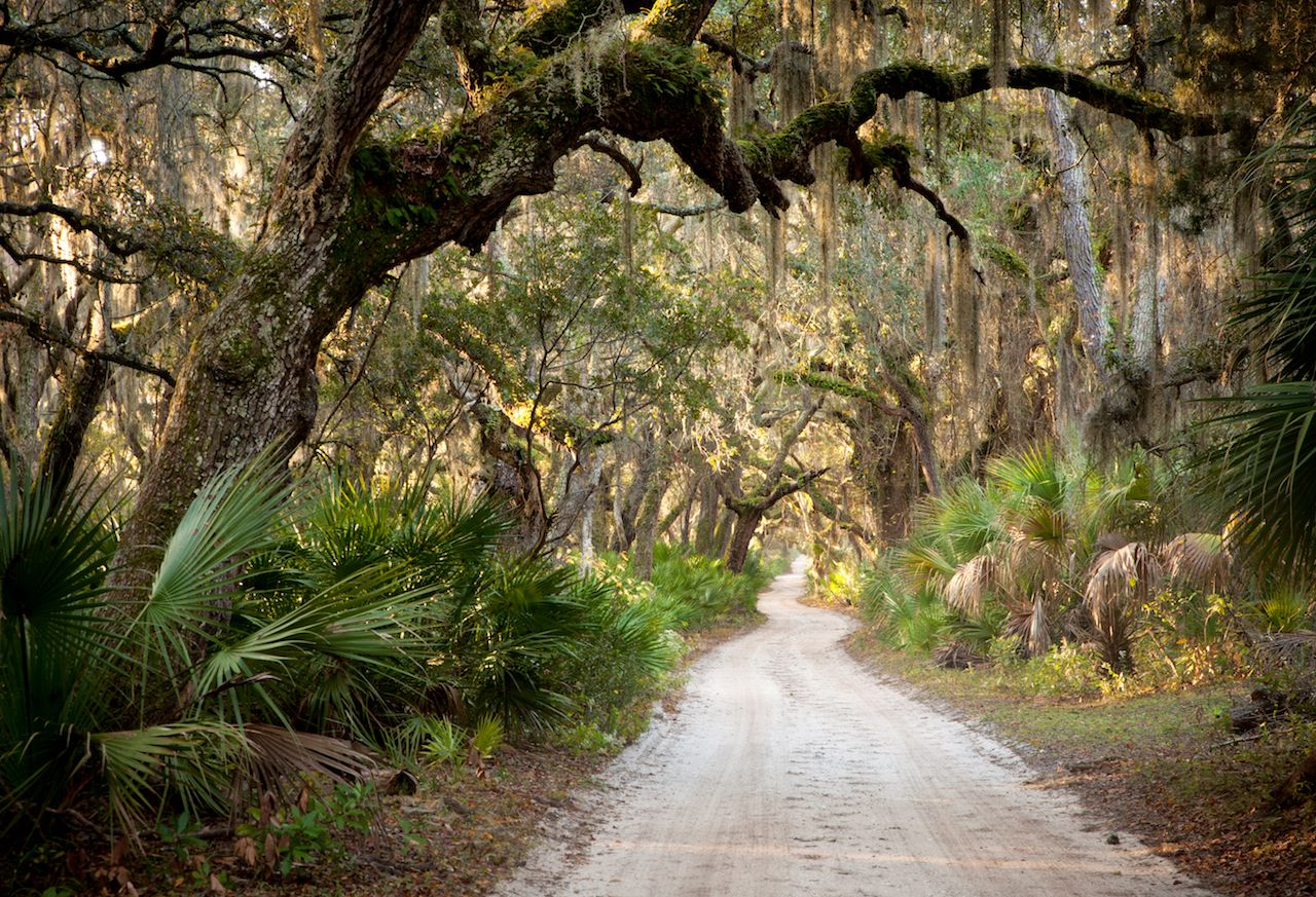 Main Road - Cumberland Island, Georgia