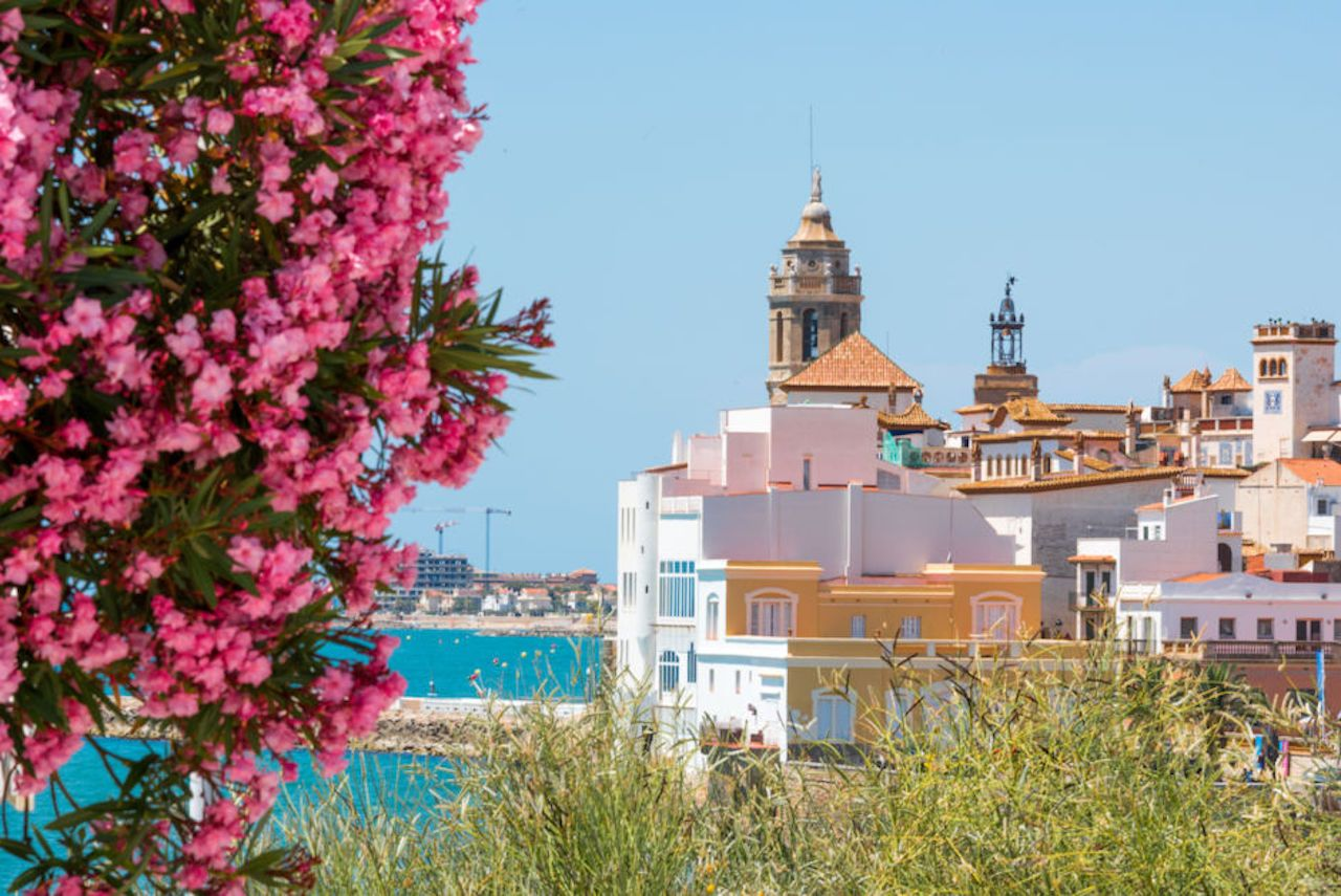 Blooming Oleander against the background of the historical center in the Sitges, Barcelona, Catalunya, Spain
