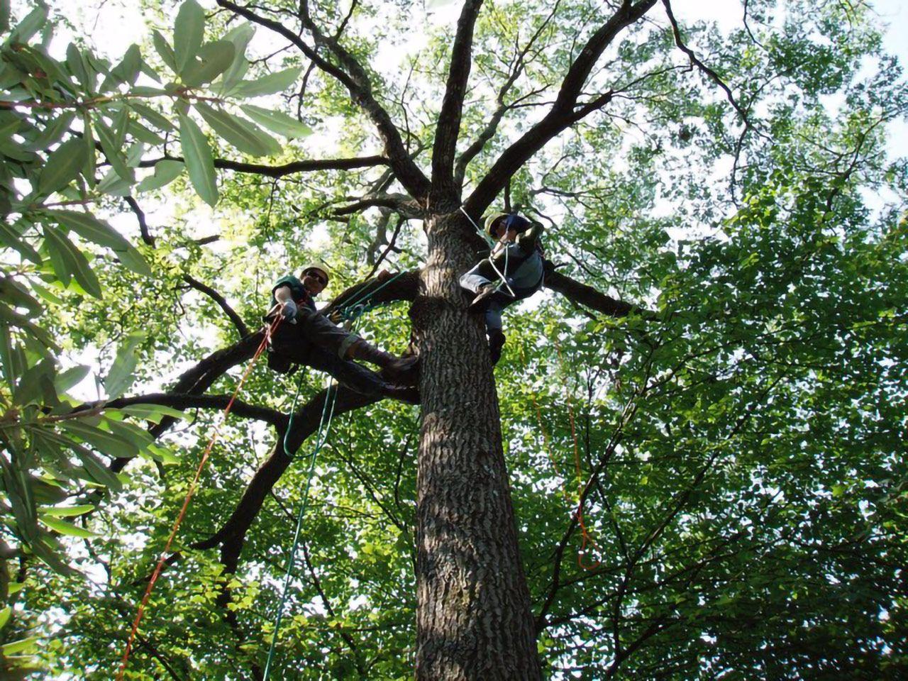 Blue Ridge Tree Climbing Virginia