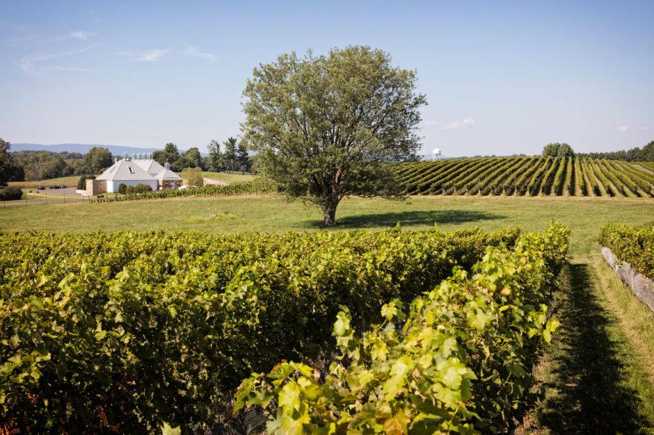 Boxwood Estate Winery, Virginia