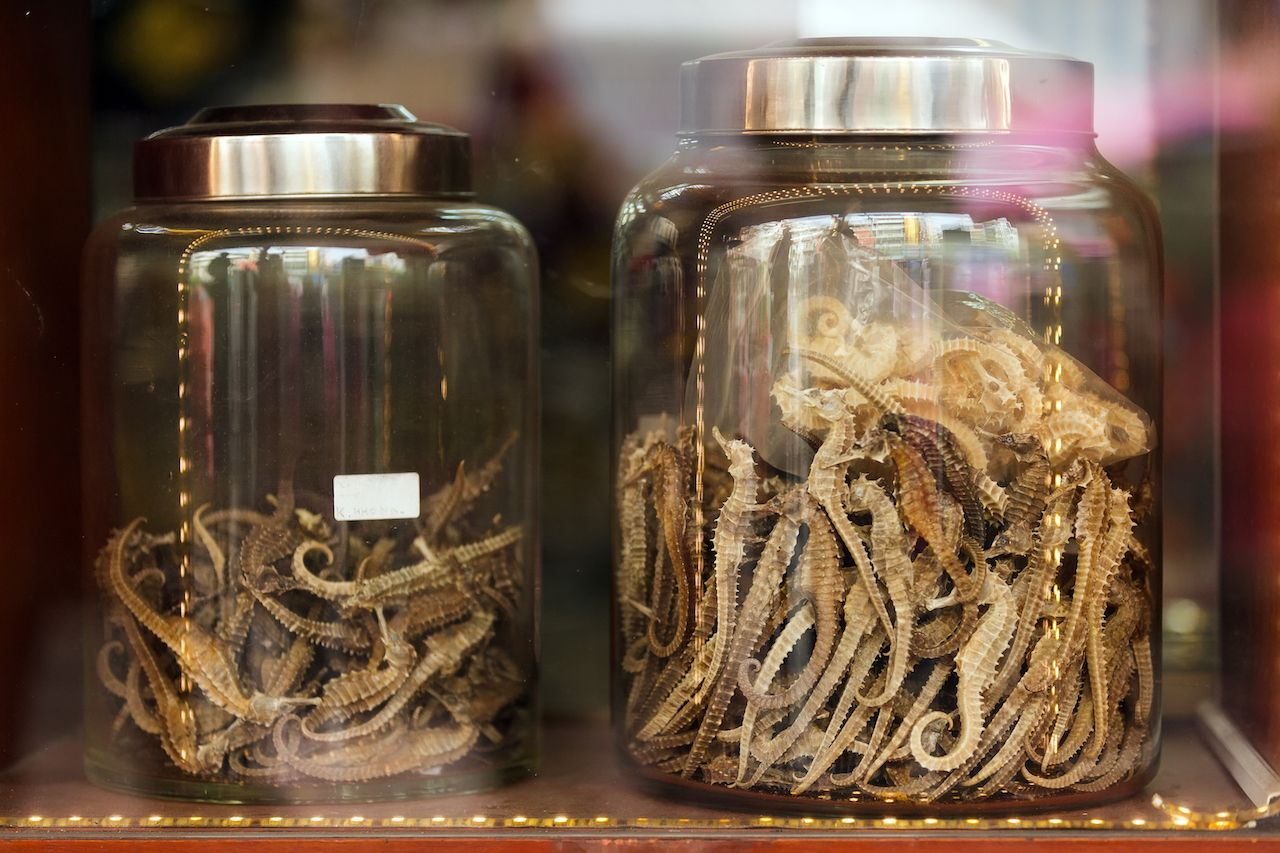 Dried seahorses China