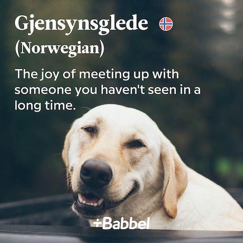 Gjensynsglede Norwegian word