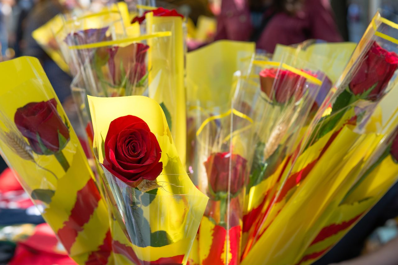 Roses with Catalan flag ribbon. traditional style for celebrating during Sant Jordi day in Spain