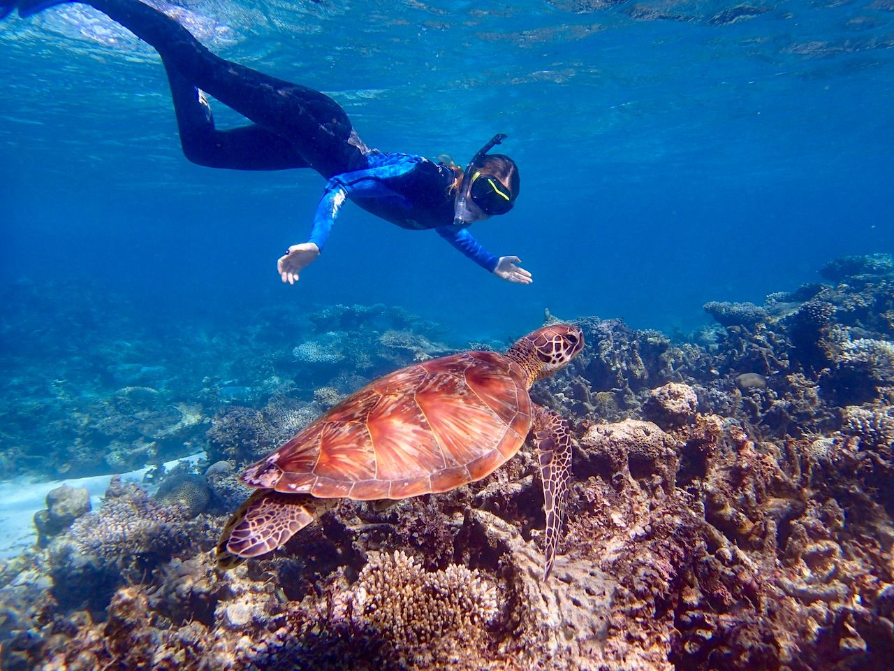 Turtle Swimming with a Snorkeler at Ningaloo Reef