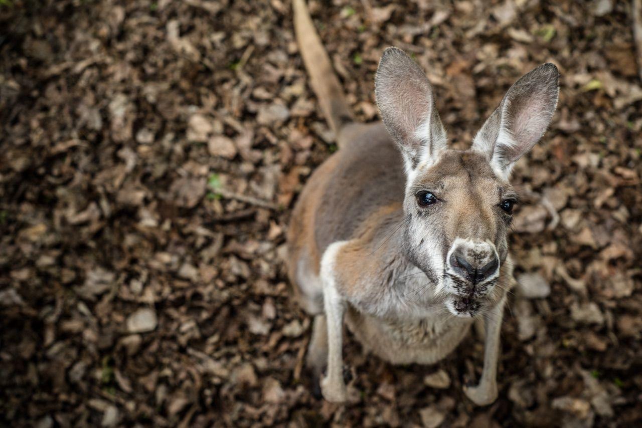Watertown South Dakota kangaroo