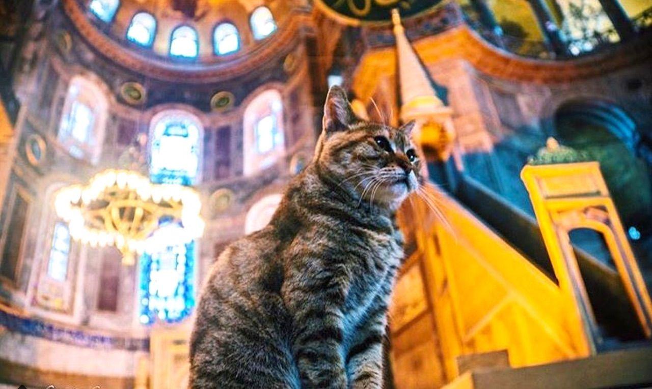 Hagia Sophia in Istanbul has a cat
