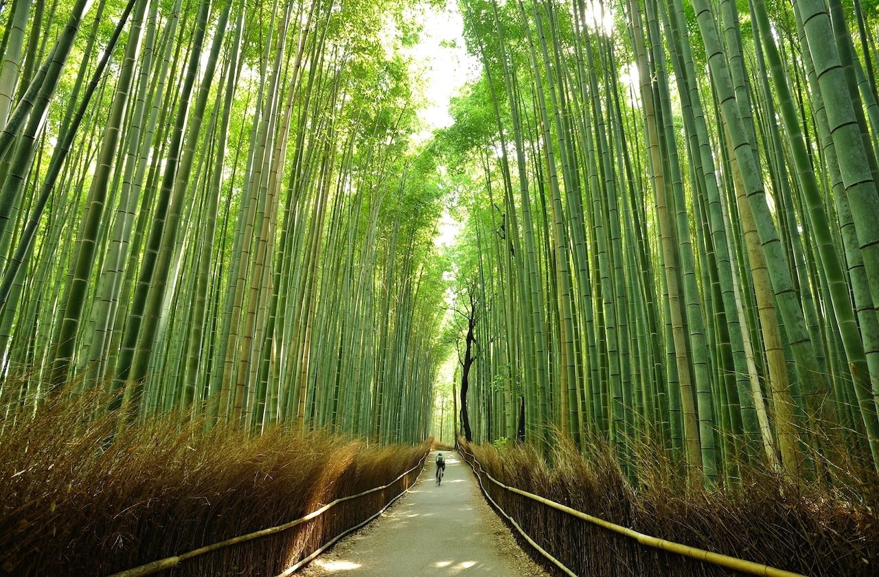 Cyclist in bamboo forest in Kyoto