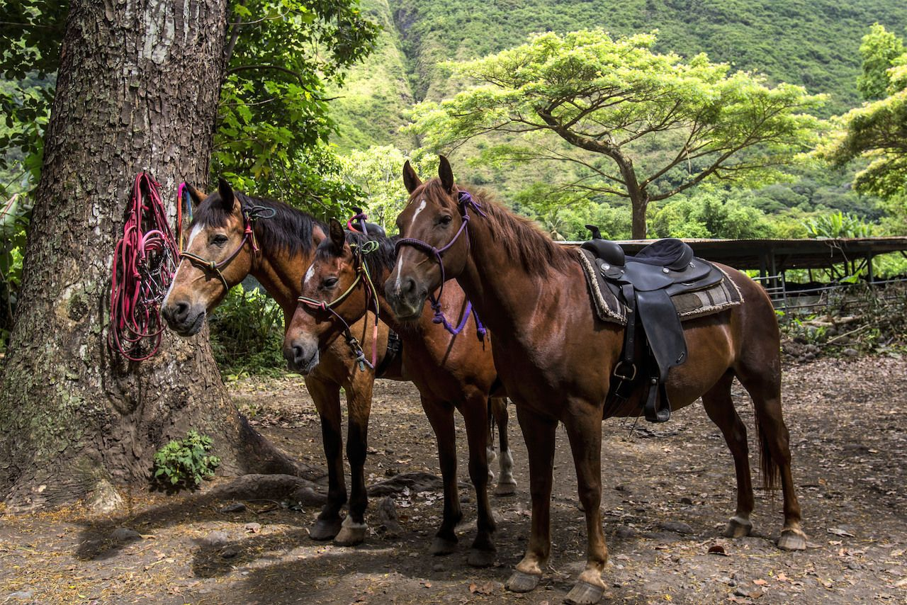 Horseback Riding in the Lush Green Waipio Valley of Hawaii