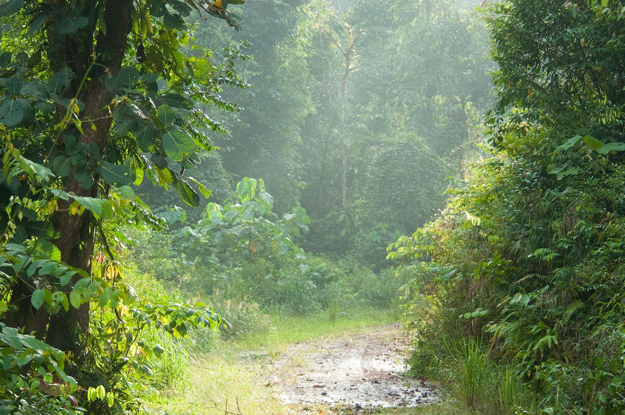 Morning-mist-in-Deramakot