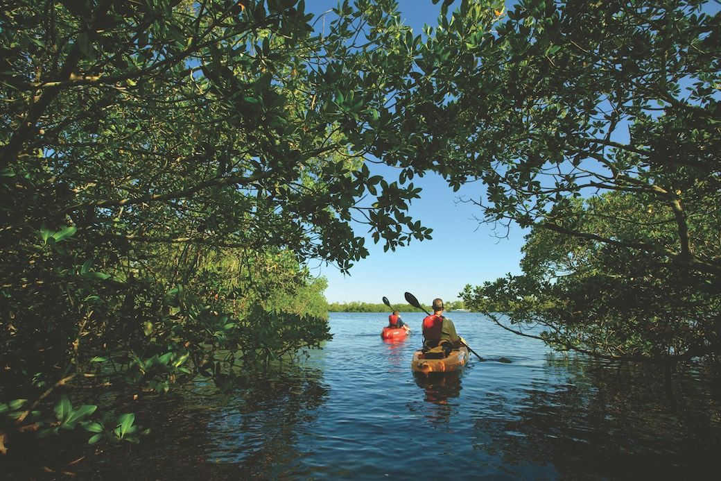 Fort Myers Sanibel mangroves kayak