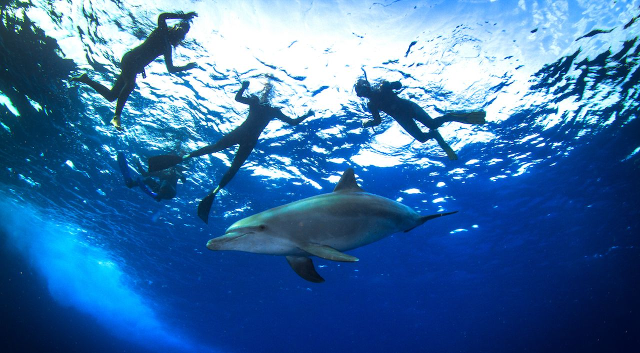 Swimming with dolphins in Egypt