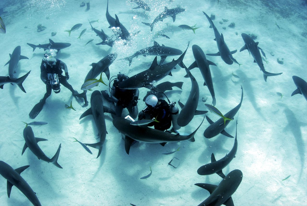 sharks surrounding divers