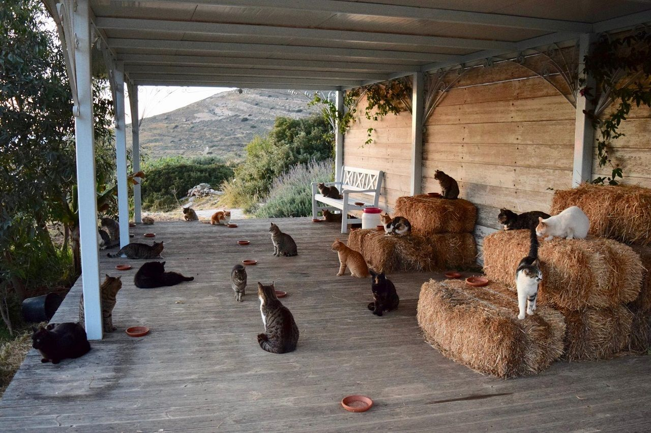Cats on the Greek island of Syros
