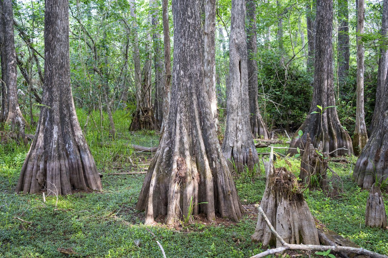 Big Cypress National Preserve, FL