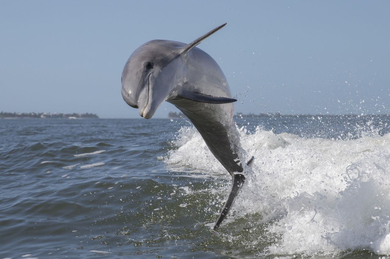 Town to ban swimming due to dophin