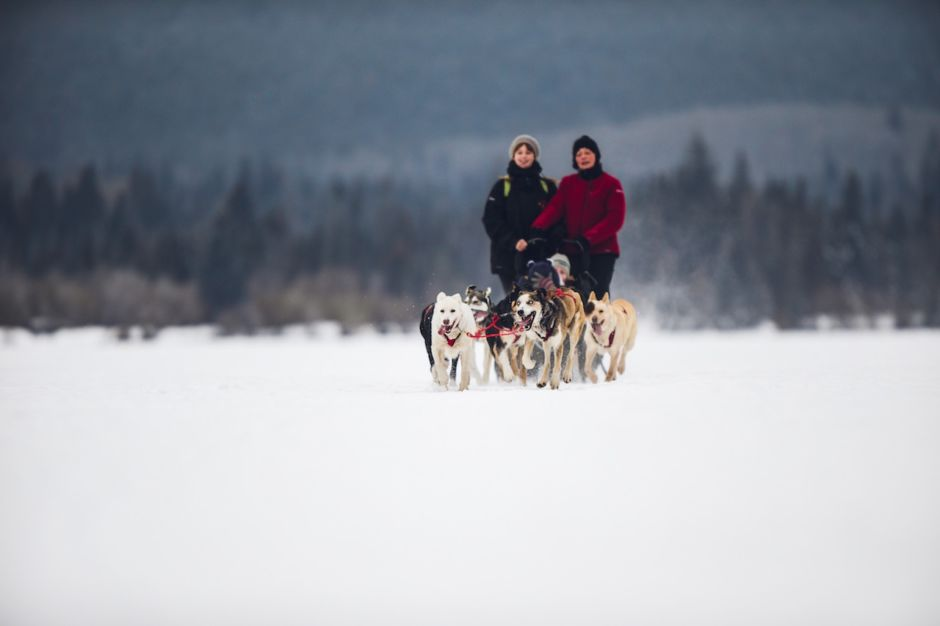 Dogsledding Jasper Canada winter
