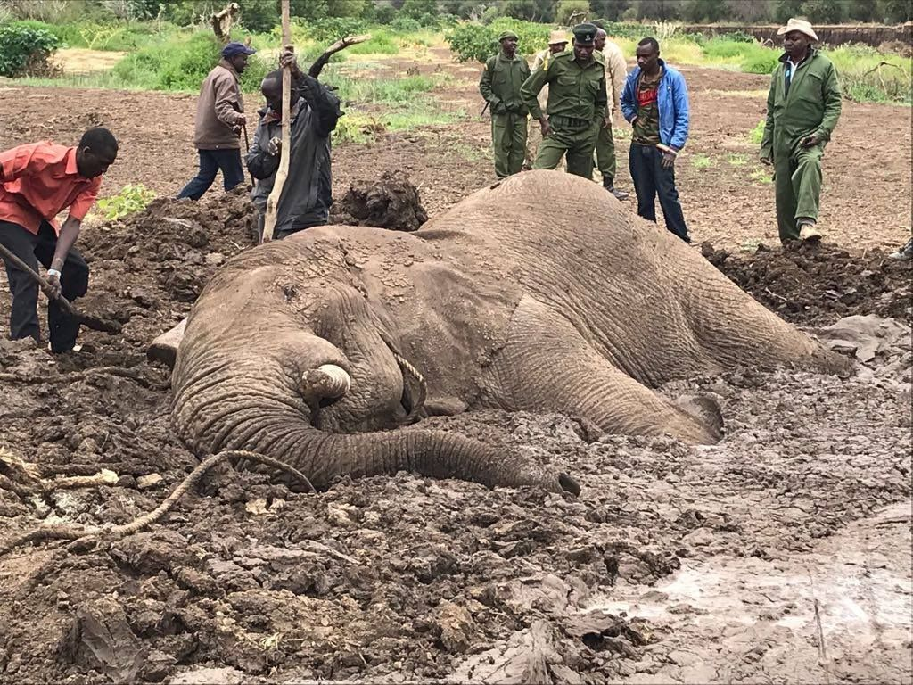 Elephant trapped in mud in Kenya