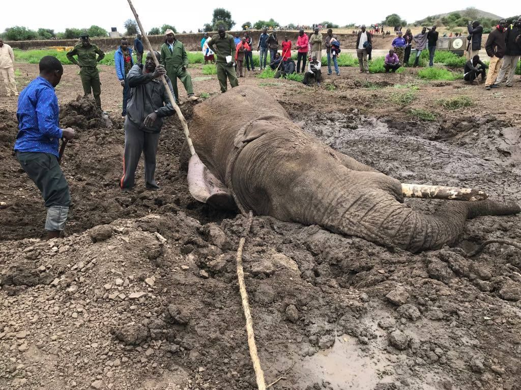 Elephant trapped in mud in Kenya 2