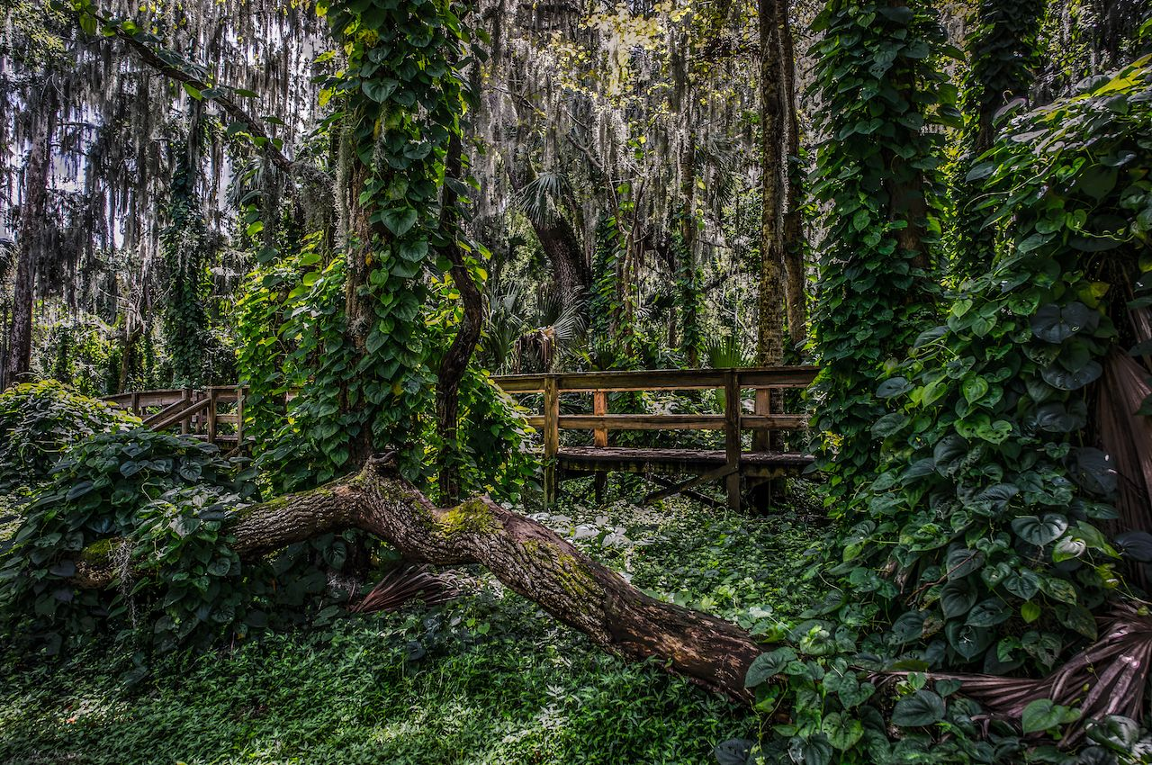 Florida Forest Trail