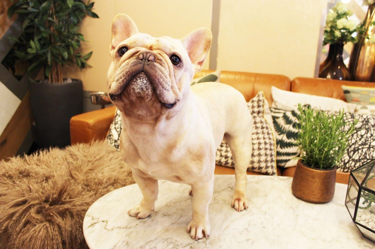 Dog cafe opening in London