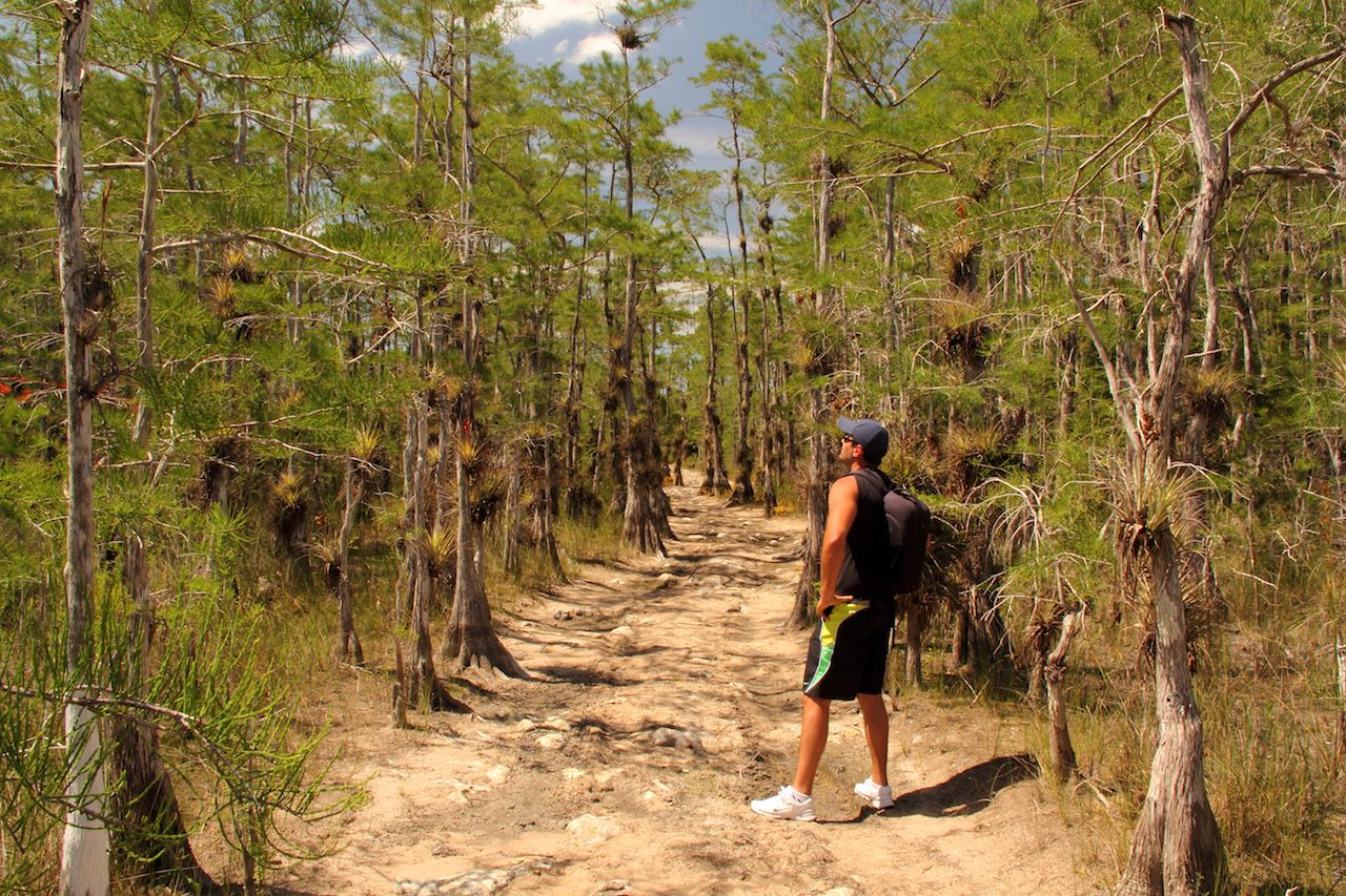 Hiker in Big Cypress National Preserve, FL