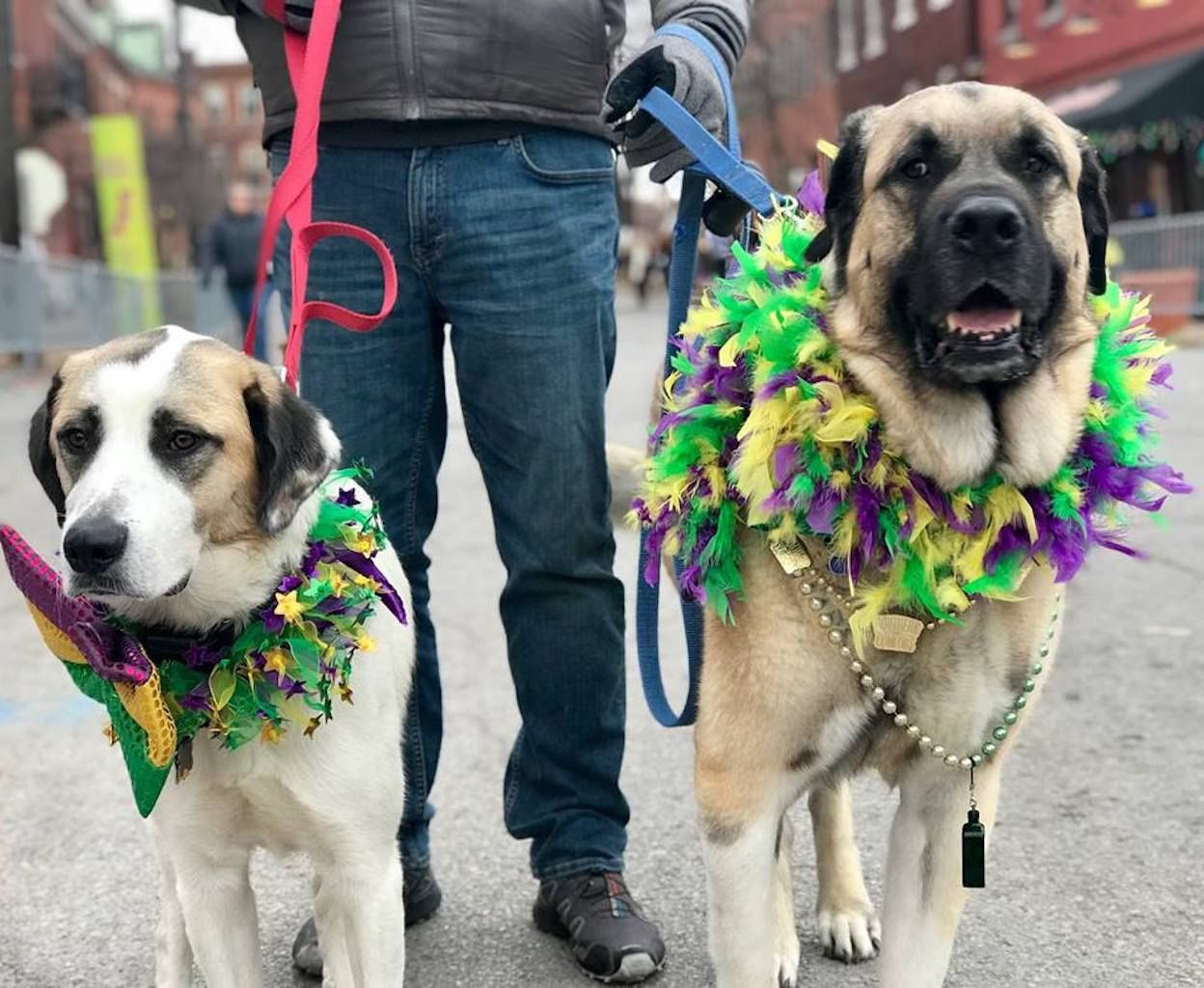 Mardi Gras in Missouri