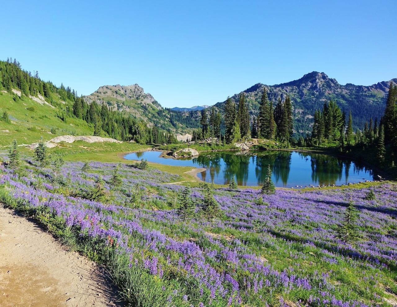 Wildflowers on the PCT