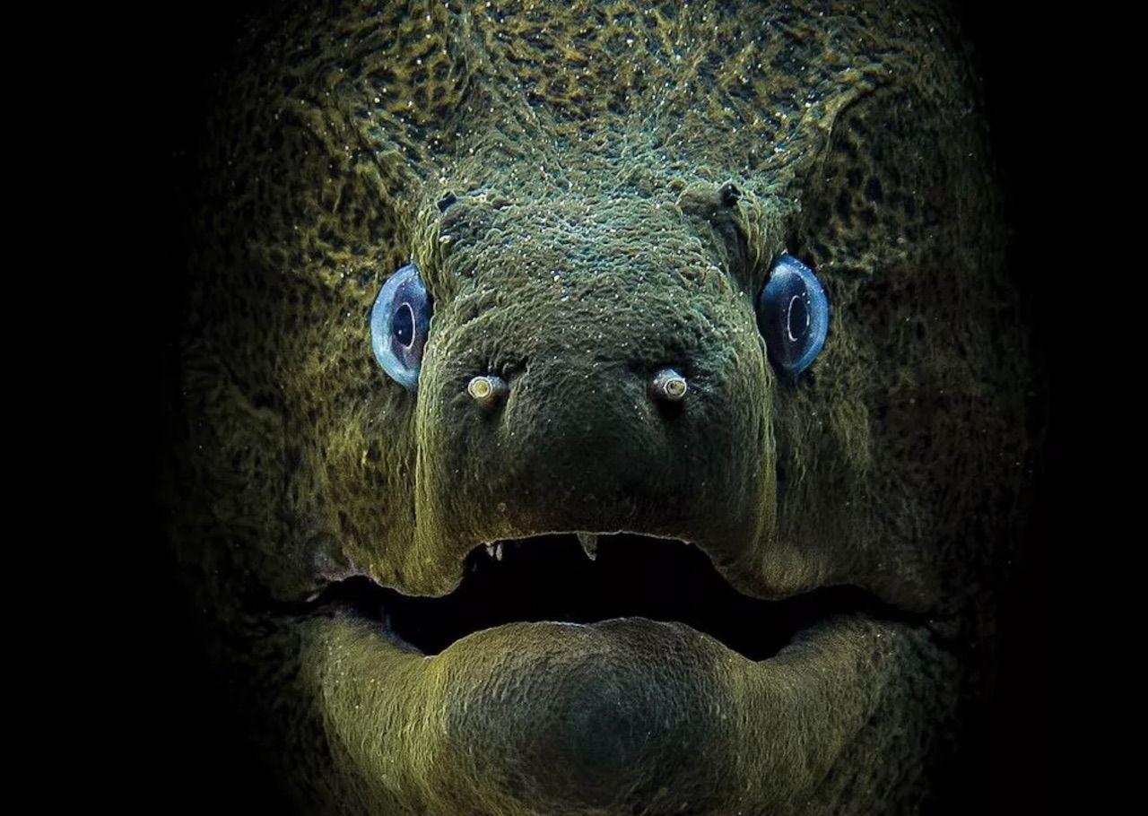 Scuba Diving magazine compact photo contest winner