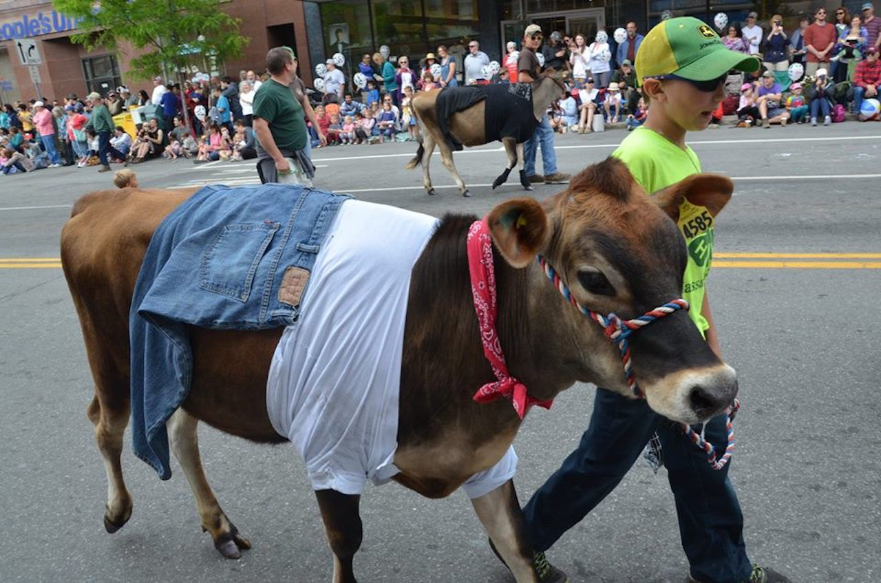 Strolling of the Heifers festival