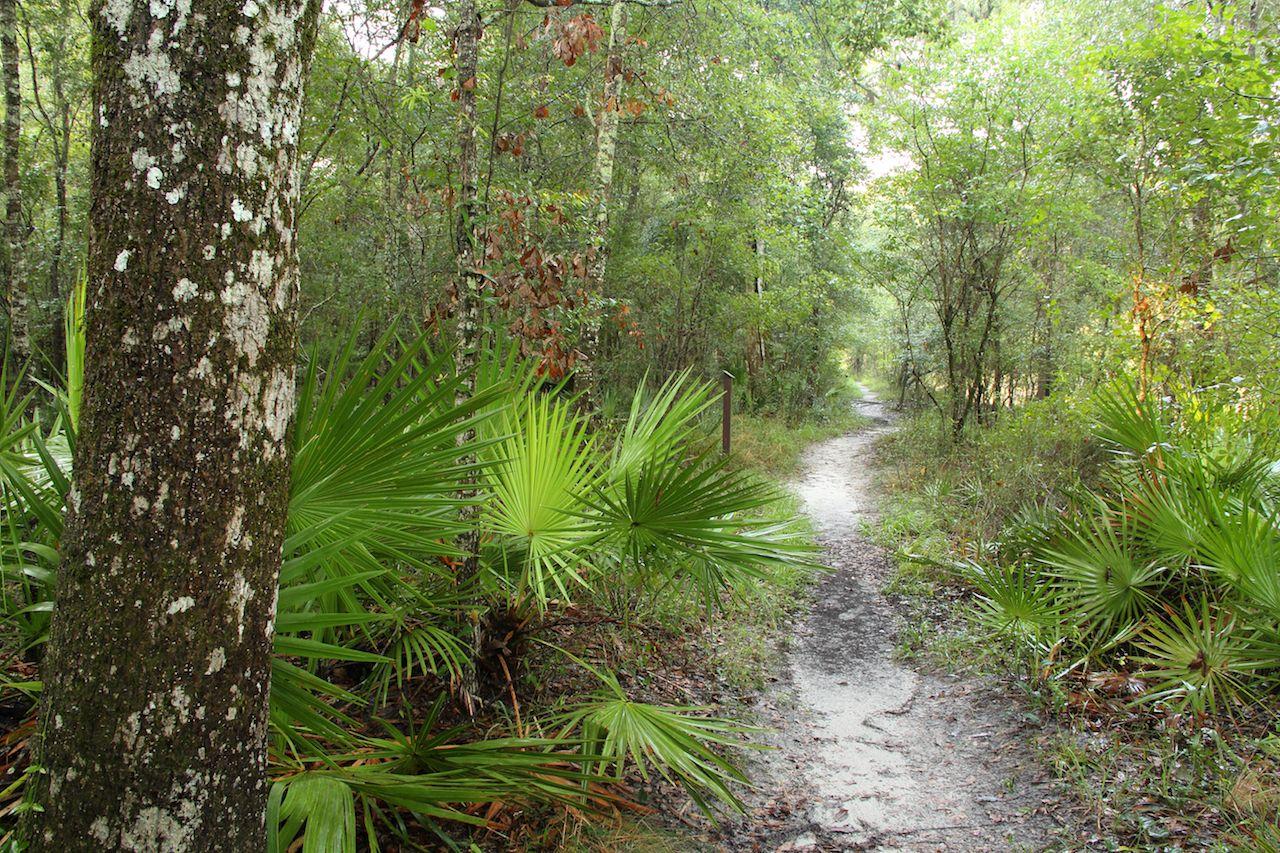 Suwannee River State Park, FL