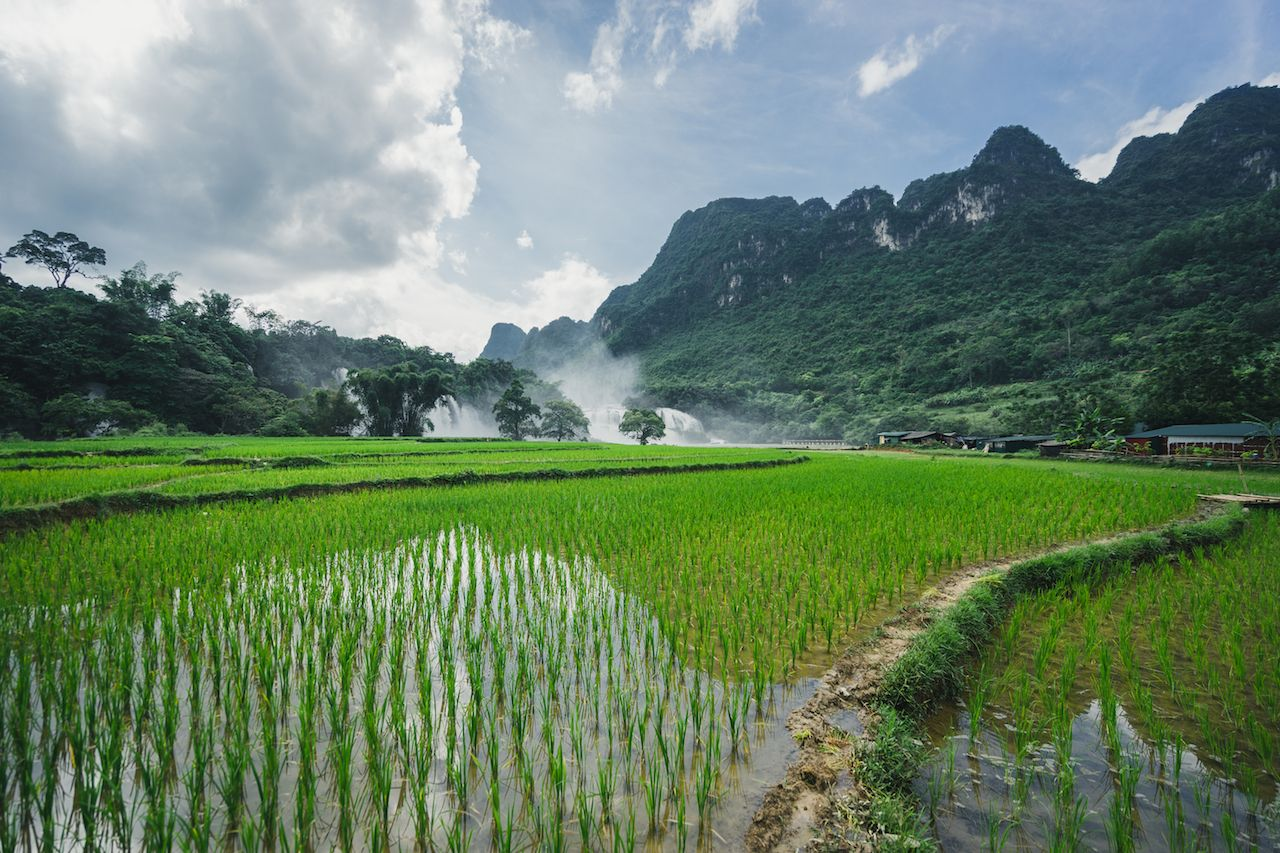 Vietnamese rice fields in Ha Giang Loop