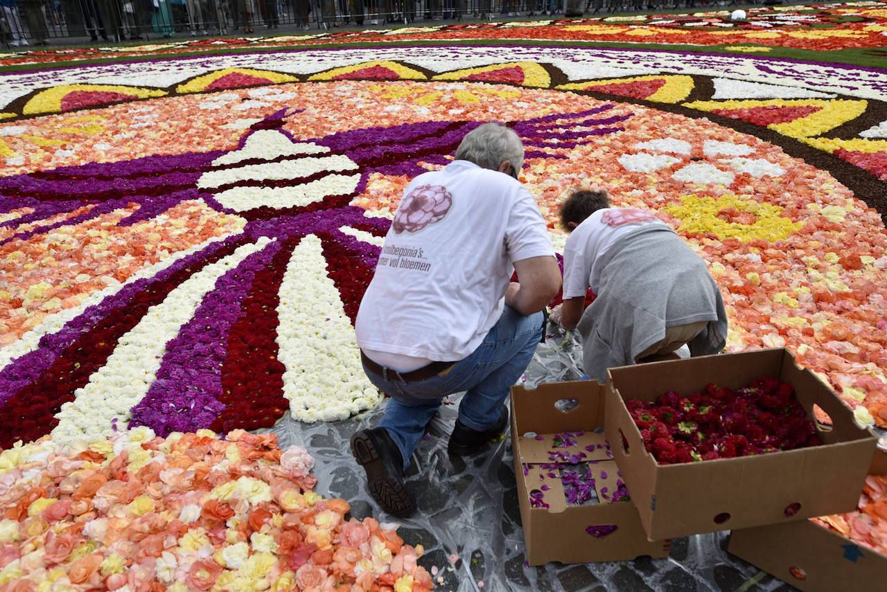 Workers putting flowers in the flower carpet in Brussels