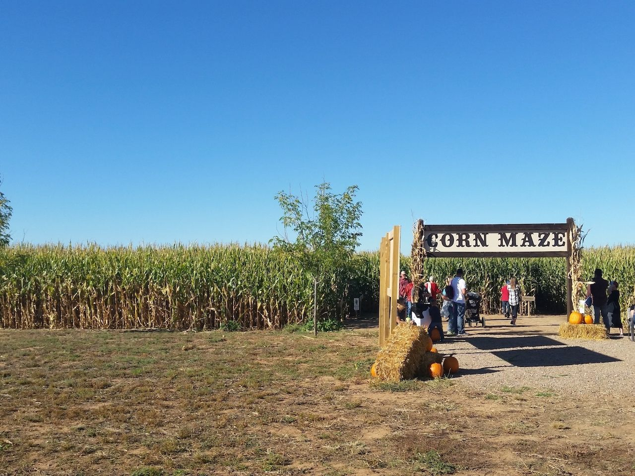new mexico corn maze
