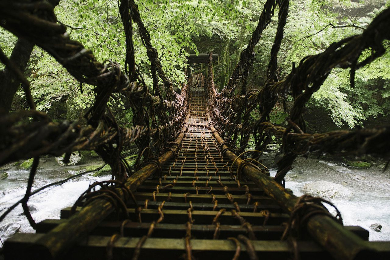 Forest with wooden rope bridge in Japan