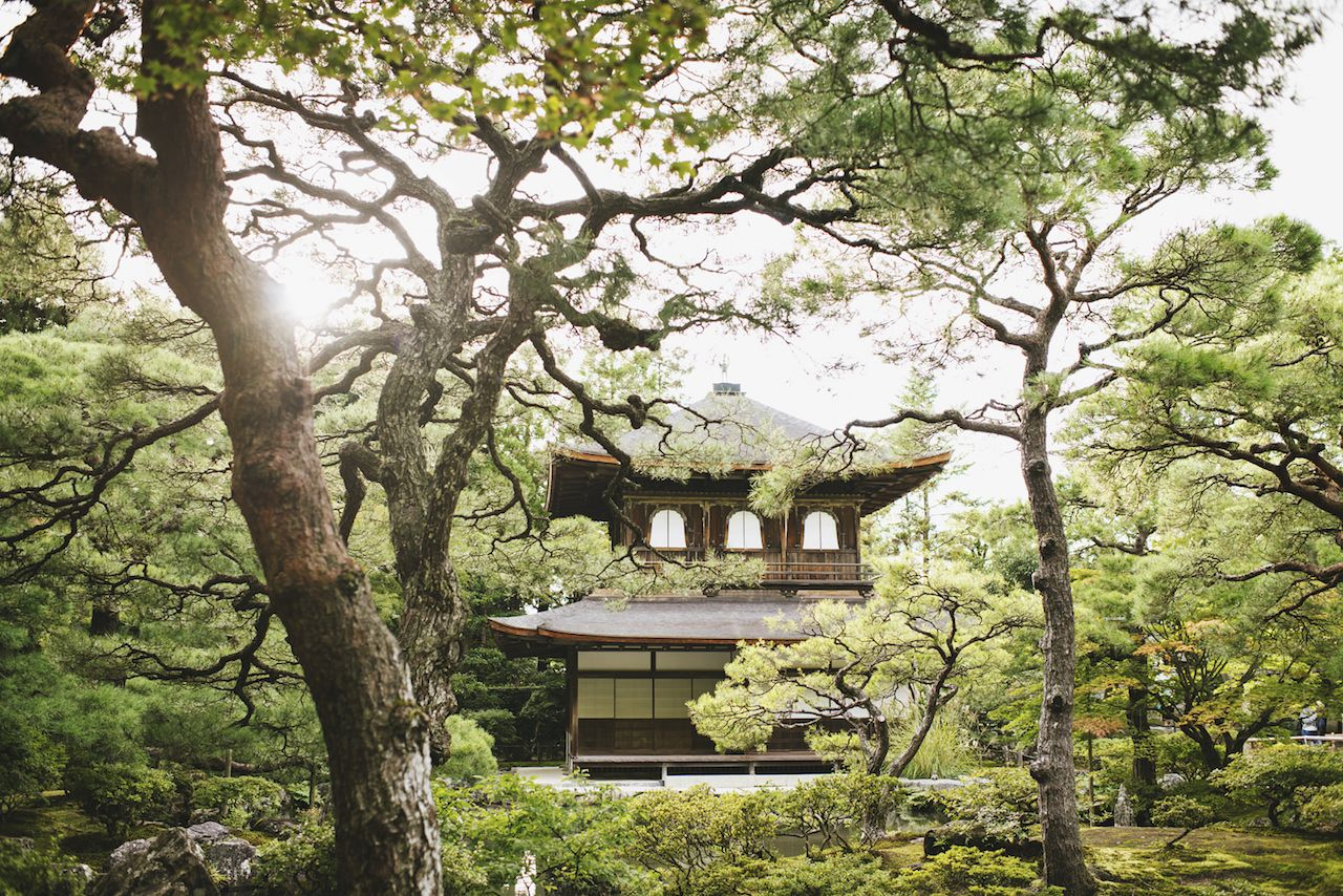 Green forest with temple like structure in Japan