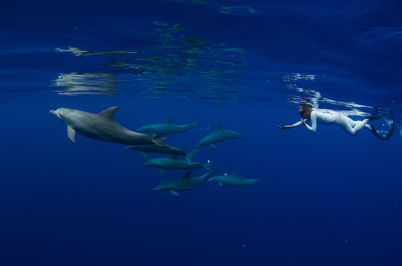 A snorkeler freedives together with indo pacific bottlenose dolphins