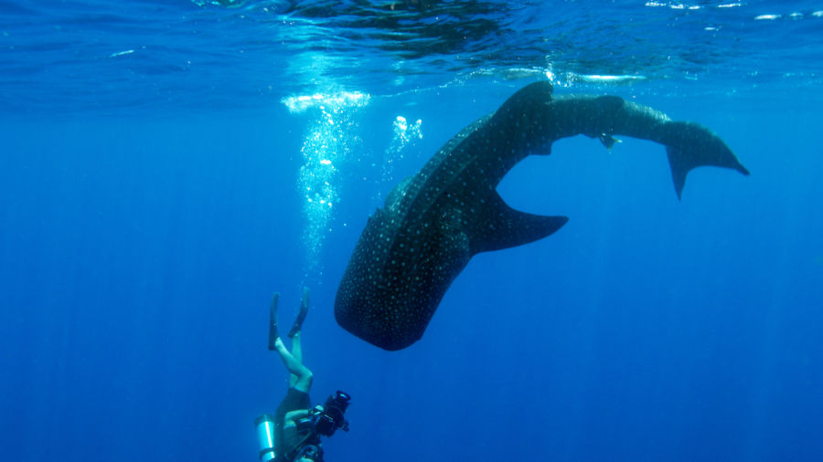 Where to swim with the world's most amazing marine wildlife