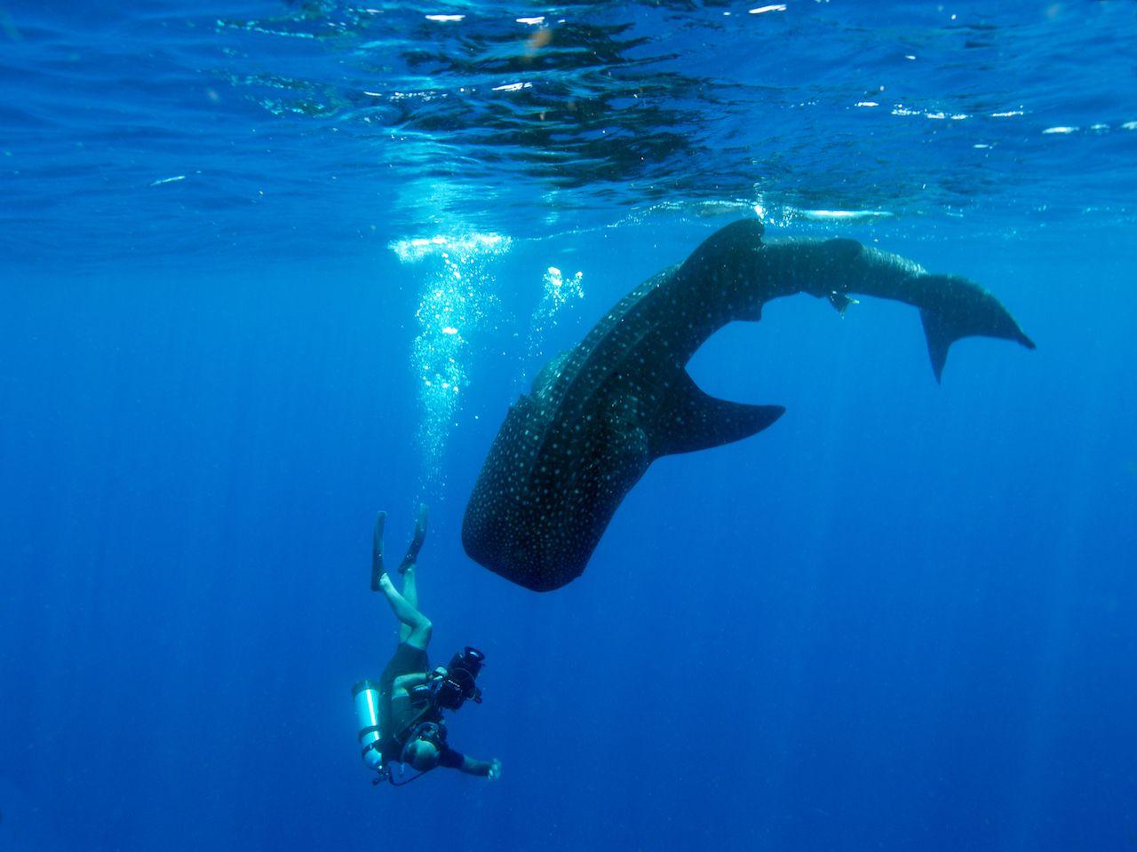 Where to swim with marine wildlife