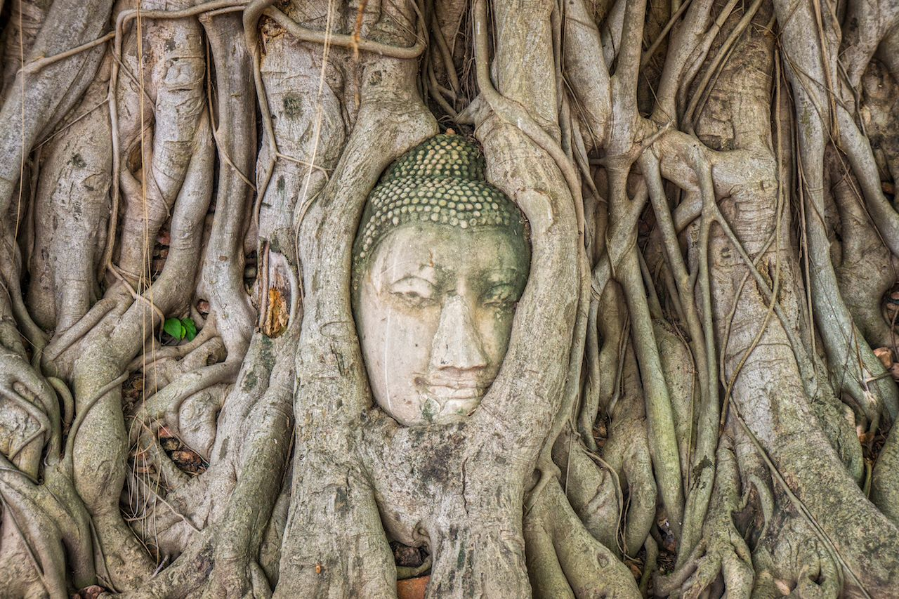 Ancient statue head of Buddha image embedded in a Banyan tree roots