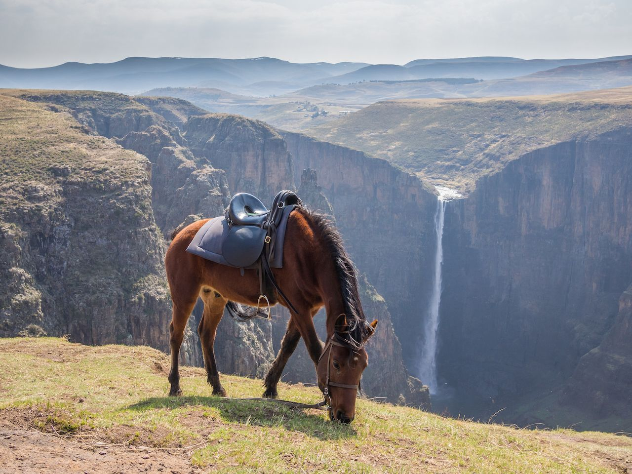 Basuto pony in front of Maletsunyane Falls in Lesotho