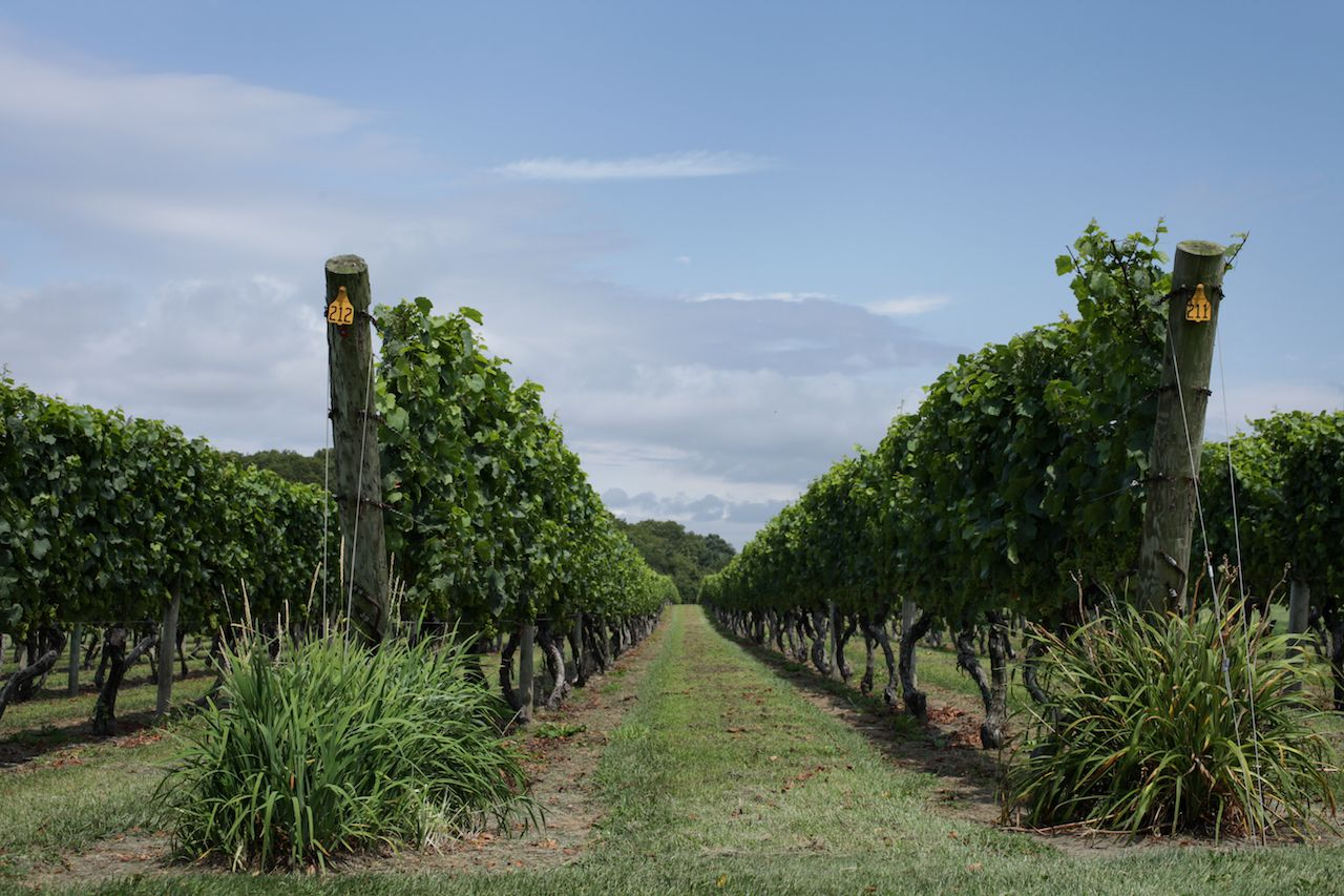 Beautiful vineyard in Rhode Island
